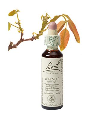 Bach Walnut / Walnoot 20 ml 33