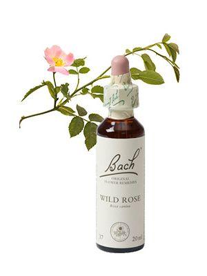 Bach Wild Rose / Hondsroos 20 ml 37