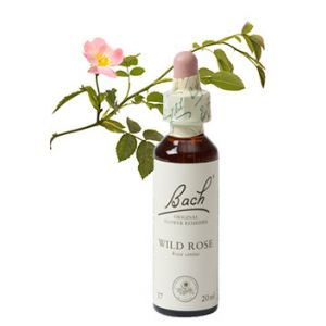 Bach Wild Rose / Hondsroos 20 ml 37